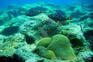 morskaja lovushka